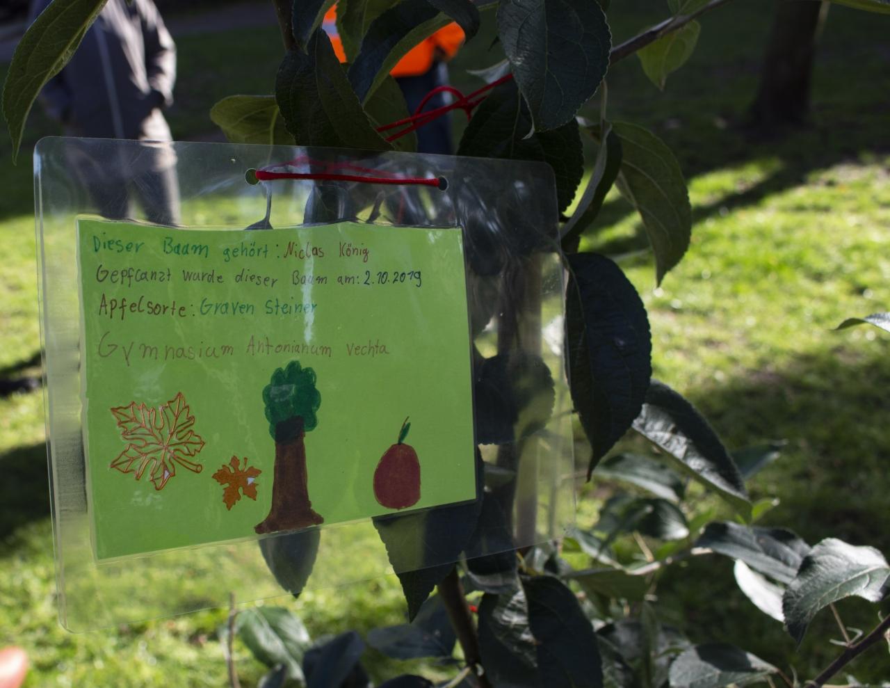 Obstbäume für den Klimaschutz